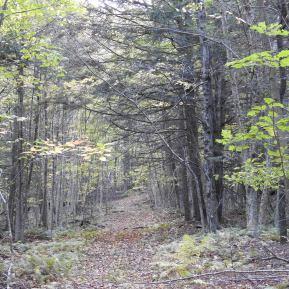 Vermont woods