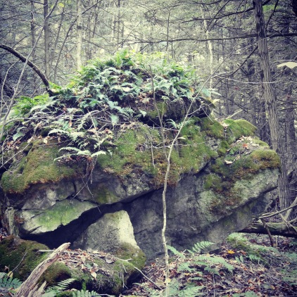 vermont Moss fern rock formation nature