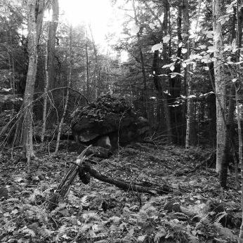 b&w photo vermont woods