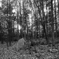 b&w photo vermont woods sunset